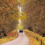 Autumn-road thumbnail