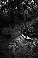 beautiful walk (Lauren Broken) Tags: art afternoon angular autumn canon colours colorful beautiful bw blackandwhite moon portrait pretty plants park exposure experimental enchanted exterior threes travel temperature texture happy journey love lights landscape lake grain green digital dawn