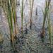 Stillness...At The Lake - (Explored) (Pacific NW / Nor Cal Surveyor) Tags: