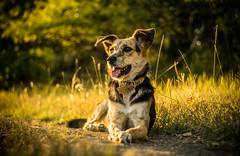 Cara (Pan.Ioan) Tags: dog animal pets canine nature outdoors smiling