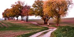 November Zauber - November magic ! (Karabelso) Tags: trees nature fall autumn evening wood sky blue baum natur herbst abendgehölz himmel panasonic lumix gx7