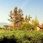 Ban Dong Pa Wai. บ้านดงป่าหวาย thumbnail