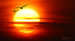Winging south, towards the sun, ... (Klaus • infrequently online •) Tags: sonne sun sole sol soleil zon солнце ghrian aurinko güneş ήλιοσ сунце słońce sól ne matahari sunce слънце herbst fall autum caduta autunno caída otoño automne val queda падение titim falla hösten lasku syksy sonbahar πτώση høst falde efteråret jatuh јесен аутум spadek rơi haust padec jeseni jesen podzim vögel birds uccelli aves oiseaux gevogelte pássaros птицы éin fåglar linnut kuşlar ταπουλιά fugler fugle burung птица ptaków chim fuglar ptice птици