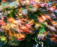 Vento d'autunno (Robyn Hooz) Tags: wind vento fall autunno foglie leaves alberi albero tree padova palette painting pain cadere love