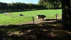 Klompenpad: Rosandepad (Cor D.) Tags: rivier rivernederrijn rosandepad klompenpad oosterbeek arnhem nederrijn rijn gelderland nederland netherlands rhine riverrhine
