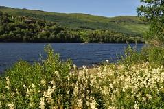 Vue sur le Loch Lomond entre Tarbet et Inverarnan, Ecosse, Royaume-Uni. (byb64) Tags: lomond lochlomond ecosse schottland scotland scozia escocia grandebretagne greatbritain grossbritanien granbretana ue uk unitedkingdom royaumeuni reinounido eu europe europa vereinigteskönigreich paysage paisaje paesaggio landscape landschaft lac lake lago see loch vue view vista veduta argyll argyllandbute inverarnan tarbet