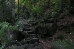 Am Gertelbach im Nordschwarzwald (nordelch61) Tags: deutschland schwarzwald heimat wald mittelgebirge gertelbach wasserfälle wildbach moos urwald felsen steine bemoost bäume baum ast äste zweige zweig wurzel wurzeln