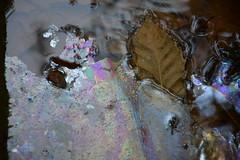 DSC_1704 (griecocathy) Tags: macro eau ferrugineuse feuille pellicule tiges multicolore argenter beige marron noir brillance éclat brun