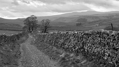 Pennine Bridleway, near Stainforth, Upper Ribblesdale, Yorkshire Dales National Park, UK (Ministry) Tags: pennine bridleway stainforth upper ribblesdale north yorkshire dales nationalpark uk landscape tree path limestone dryrigg quarry moughton ingleborough hill drystonewall dry stone wall monochrome blackandwhite fence cloud