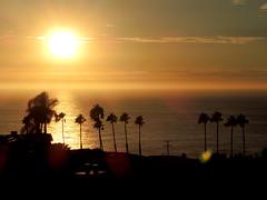 Sunset (MelindaChan ^..^) Tags: sandiego usa sunset chanmelmel mel melinda melindachan tree palm la jolla sea nature california
