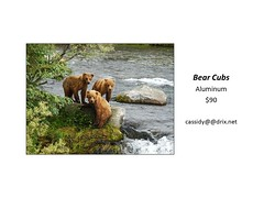 "Bear Cubs • <a style=""font-size:0.8em;"" href=""https://www.flickr.com/photos/124378531@N04/45312919842/"" target=""_blank"">View on Flickr</a>"