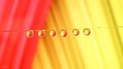 Yellow Orange - 6268 (ΨᗩSᗰIᘉᗴ HᗴᘉS +44 000 000 thx) Tags: drop droplet macro yellow orange tg5 color hens yasmine namur belgium europa aaa namuroise photo friends be yasminehens interest eu fr lanamuroise vivid water