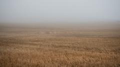 Fileds of Stonehaven (aleflorea.photography) Tags: stonehaven uk scotland nature maze field fog minimalist
