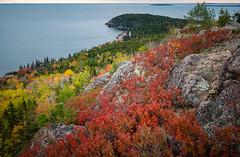 Acadia National Park Fall Foliage (willsdad48) Tags: acadianationalpark nationalparks maine newengland rockycoast atlantic ocean sunrise travel travelphotography nature hiking fujifilmxt2 fujifilm xt3 fujifilmxseries landscape seascapes