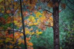 Rainy Afternoon (ROPhoto77) Tags: newengland outdoors autumn autumncolors rain leaves trees textured sony a7iii alpha