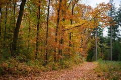 Walking past autumn (Erik van Ossenbruggen) Tags: lagevuursche utrecht nederland netherlands autumn herfst fall forest bos nikon d750 50mm 18