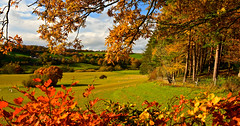 AUTUMN LANDSCAPE (chris .p) Tags: nikon d610 worcestershire england uk autumn 2018 view colour trees fields arley arboretum capture november