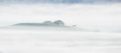 Barely there (wandering indian) Tags: fog nature landscape sigma nikon telephoto benro kedardatta california petaluma winterfog sunrise cloudsstormssunsetssunrises travel