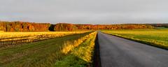 ile 2018-133 (Tasmanian58) Tags: sunrise orleans island autumn quebec canada morning fiels sony a7ii loxia loxia35 235mm 35mmf2