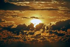 un oiseau dans le ciel brûlant (rondoudou87) Tags: sky ciel nuage cloud sun soleil bird oiseau light lumière pentax k1 smcpda300mmf40edifsdm burning brûlant color couleur nature natur rondoudou87 rising rise risingsun