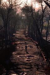 Country Roads (xXSamirXx) Tags: fallout fallout4 bethesda bethesdasoftworks reshade reshadeframework