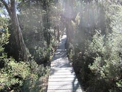 IMG_3788 (shearwater41) Tags: australia tasmania cradlemountain dovelake boardwalk