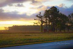 Sunrise Light, ONC (crziebird) Tags: sunrise oriental onc northcarolina orientalnorthcarolina