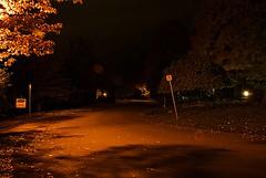 Pond Street (Pwern2) Tags: ottawa ottawaregion cityofottawa pondstreet thepond rockliffepond streetlights streetlamps longexposure night dark evening leaves concrete street road sign intersection