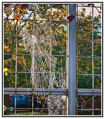 Nature - Spider - Large Spiders Web. View Full Size to Appreciate the Intricate Beauty. (Bill E2011) Tags: england spiders web structure insects