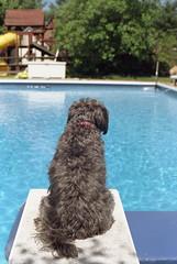 pool (bpwilby) Tags: 200speed 35mm film kodak nikon nikonf4 summer usa c41 kodakgold kodakgold200 mercercounty negative newjersey nj printfilm speed200 westwindsor