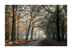 Foret enchantée-125A2060-Modifier (helenea-78) Tags: bois forêt nature forêtderambouillet fog brumes brume brouillard arbres arbre trees tree