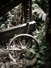 An Old Timer (Steve Taylor (Photography)) Tags: chain wheel overgrown machinery fern muted brown green wood metal newzealand nz southisland canterbury christchurch leaves bush