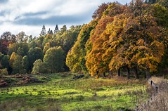Autumn leaves. (AlbOst) Tags: autumn autumntrees autumncolours autumnleaves queensview perthshire