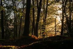 Forêt de Camors 56