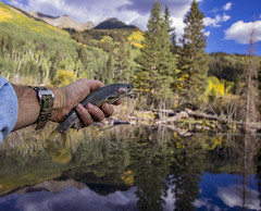 Fly Fishing For Brook Trout in a beaver pond in Colorado (Ray Redstone) Tags: coloradolandscape rockymountains flyfishingcolorado beaverpond fall brooktrout scenery mountains aspentrees sanjuanmountains forest outdoors pond mountainbackground reflection