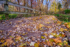 Follow the Yellow Leaf Road (tquist24) Tags: bonneyvillemillcountypark hdr indiana nikon nikond5300 outdoor autumn bridge color fall footbridge geotagged leaf leaves park tree trees bristol unitedstates