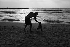 Good dog (michael.mu) Tags: 50mm leica telaviv beach dog m240 streetphotography blackandwhite bw leicaaposummicronm50mmf2 israel