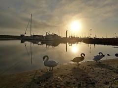 Sunrise in Simrishamn (markus_kaeppeli) Tags: schwan swan boat schiff segeln sailing
