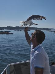 M2109212 E-M1ii 12mm iso400 f5.6 1_5000s 0 (Mel Stephens) Tags: galicia holiday o grove spain 20180910 201809 2018 q3 3x4 tall olympus mzuiko mft microfourthirds m43 1240mm pro omd em1ii ii mirrorless animal animals nature wildlife fauna bird birds gull gulls coast coastal