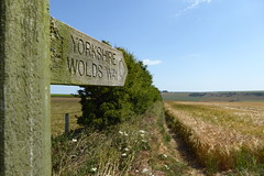 Yorkshire Wolds Way (Bods) Tags: yorkshirewoldsway staxtonwold gantontofileywalk northyorkshire cottondaleslack yorkshirewoldswaysign walk yorkshirewoldswayday5