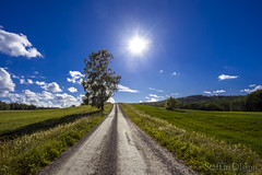 The road to somewhere (Staffan Olsson) Tags: adventure canon canoneos6d canonef1740mmf4lusm cloud eos ef1740mmf40lusm green hiking hike landscape nature outdoors outdoor panorama road roadtrip sweden sky shadow travel tree wildlife backlight
