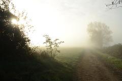 Autumn Morning (sgreen757) Tags: cotswold way path footpath autumn beautiful morning sun fog mist nikon d7000 hawkesbury upton south glos gloucestershire country countryside field fields bath lane edge tree