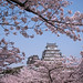 Himeji Castle Hanami - Himeji, Japan