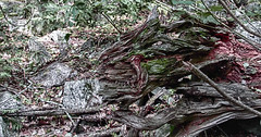 masque (jeanbernardvidal) Tags: canon arbre montagne