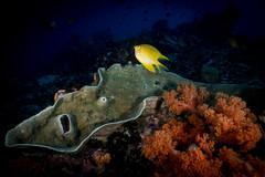 IMG_7392 (Gil Xavier) Tags: underwater scuba philippines canon fantasea g7xmk2 cebu moalbal turtlebay