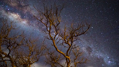 Milky Way - Australian Outback (Zach G. Photography) Tags: milkyway galaxy space stars nightscapes trees nature earth sky night dark australia outback astrophotography astro photography blue purple explore landscapes