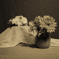 Still Life with Skull and Flowers (N.the.Kudzu) Tags: stilllife tabletop skull vase cheese cloth flowers bw sepia canondslr canoneflens lightroom
