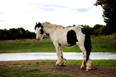 Horse's In The Wild (mpunter) Tags: horse canon camera wild nature animal
