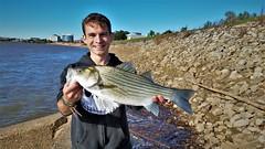 Hybrid Striped Bass (Isaac's Fishing Corner) Tags: fish fishing hybrid striped bass wiper
