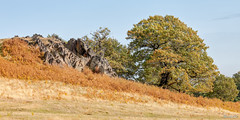 Bradgate Country Park 21st October 2018 (boddle (Steve Hart)) Tags: stevestevenhartcoventryunitedkingdomcanon5d4 bradgate country park 21st october 2018 steve hart boddle steven bruce wyke road wyken coventry united kingdon england great britain canon 5d mk4 6d 100400mm is usm ii 2470mm standard wild wilds wildlife life nature natural bird birds flowers flower fungii fungus insect insects spiders butterfly moth butterflies moths creepy crawley winter spring summer autumn seasons sunset weather sun sky cloud clouds panoramic landscape leicester unitedkingdom gb
